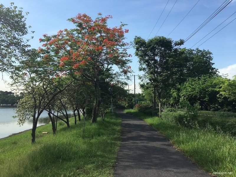 ノンボン公園の道