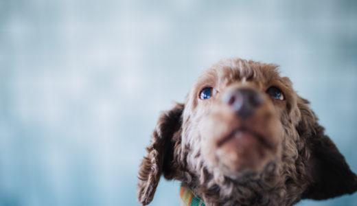 【犬と散歩しづらい梅雨の時期】運動不足によるストレスの解消方法!