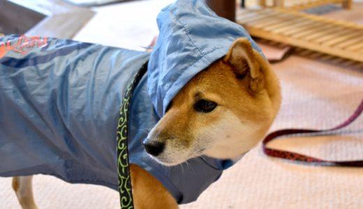 犬用かわいいレインコートおすすめ5選!選び方も解説